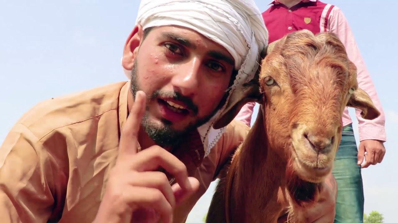 Bakra Eid Funny Video by Faraz Fictions - Bakra Mandi eid ul adha