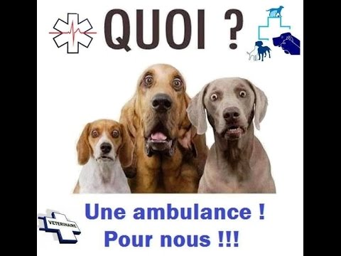 transport d 39 un chien pour scanner en ambulance usage v t rinaire youtube. Black Bedroom Furniture Sets. Home Design Ideas