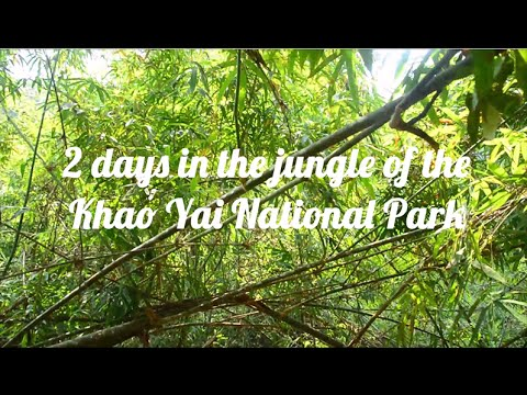 2 DAYS IN THE JUNGLE OF THE KHAO YAI NATIONAL PARK