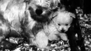 Puppy Mills - Designer Dogs