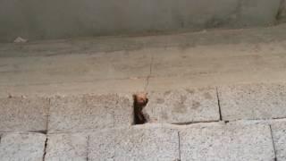Gambar cover تصدعت الجدران و هبط السقف قبل التشطيب (الحل في الوصف اسفل المقطع)