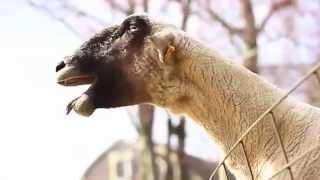 Прикольные звуки животных Смотри!!!