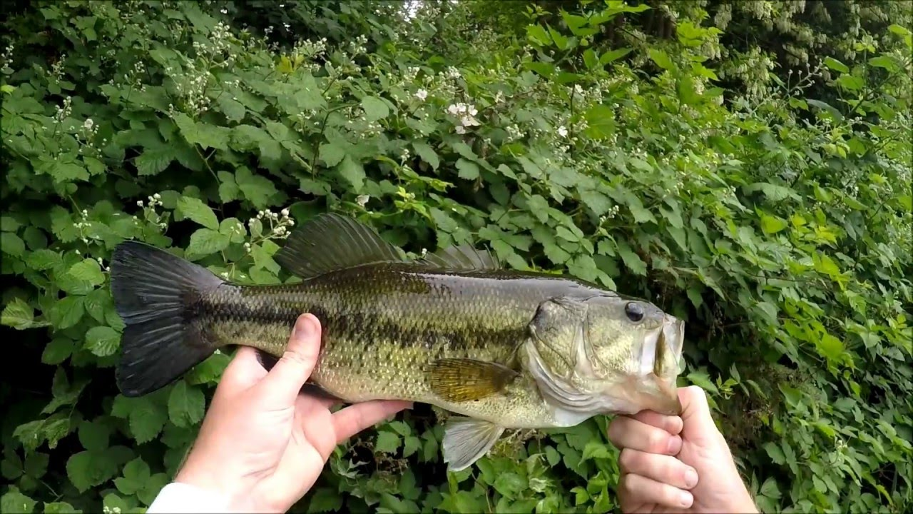 Fishing with bottles may 19 2016 sunfish and bass at for Deer creek reservoir fishing report