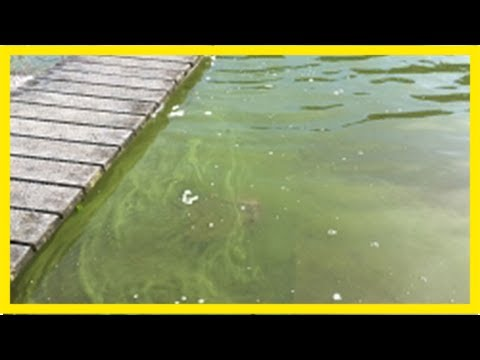 Bay lake health warning extended - the bay's news first