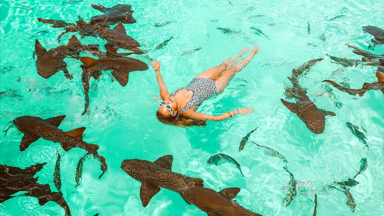 Swimming with Pigs and Sharks on a Day Trip to the Exumas, Bahamas