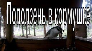 Птицы едят в кормушке. Камера в кормушке.