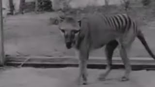15 Extinct Animals That May Be Alive