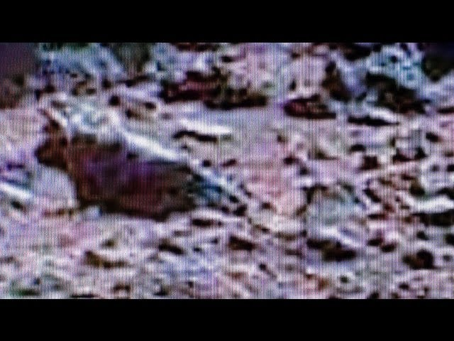 Curiosity Rover Finds Mars Horney-Dog! Travel Video