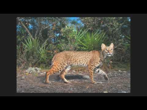 Carlton Ward Jr. - Florida Wildlife Corridor WildSpeak Presentation