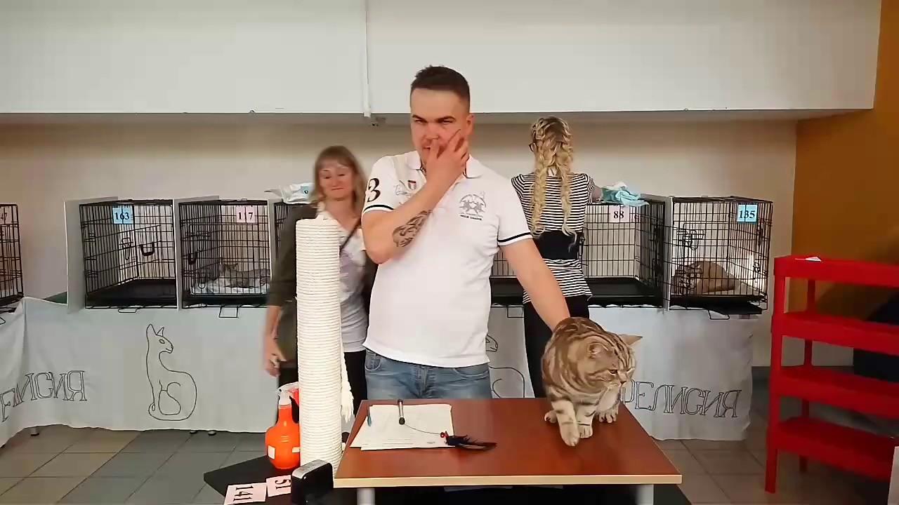 Кошка играет с шариком Cat playing with balloon - YouTube