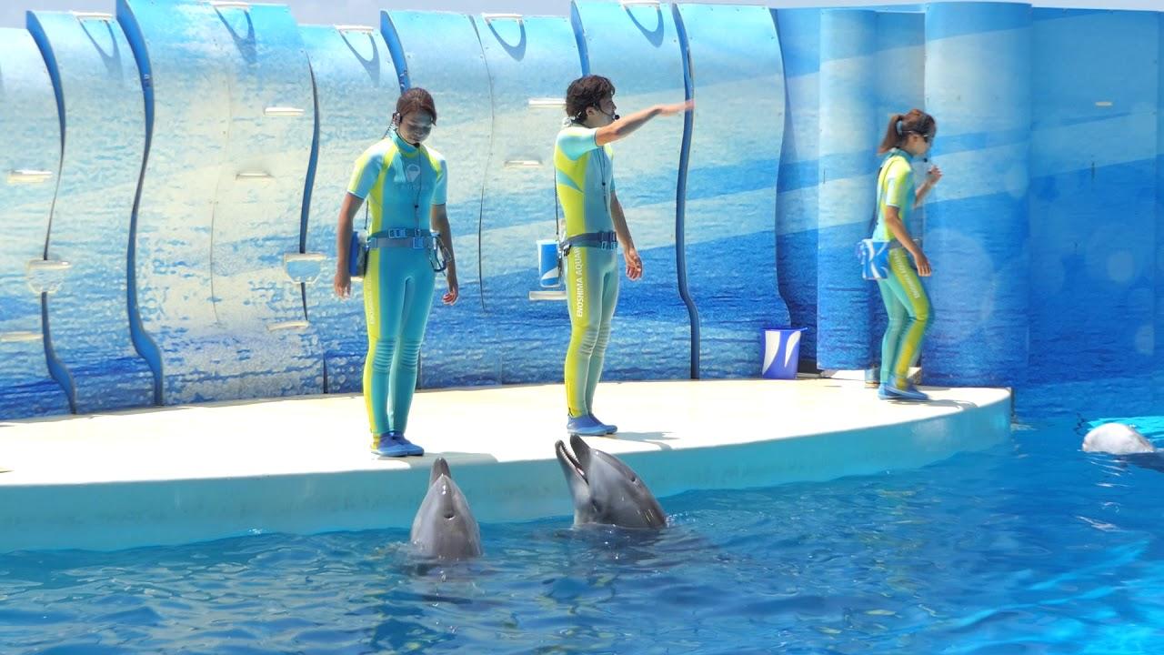 えのすい きずな(2018.07.01)12:00~ 【新江ノ島水族館】 - YouTube