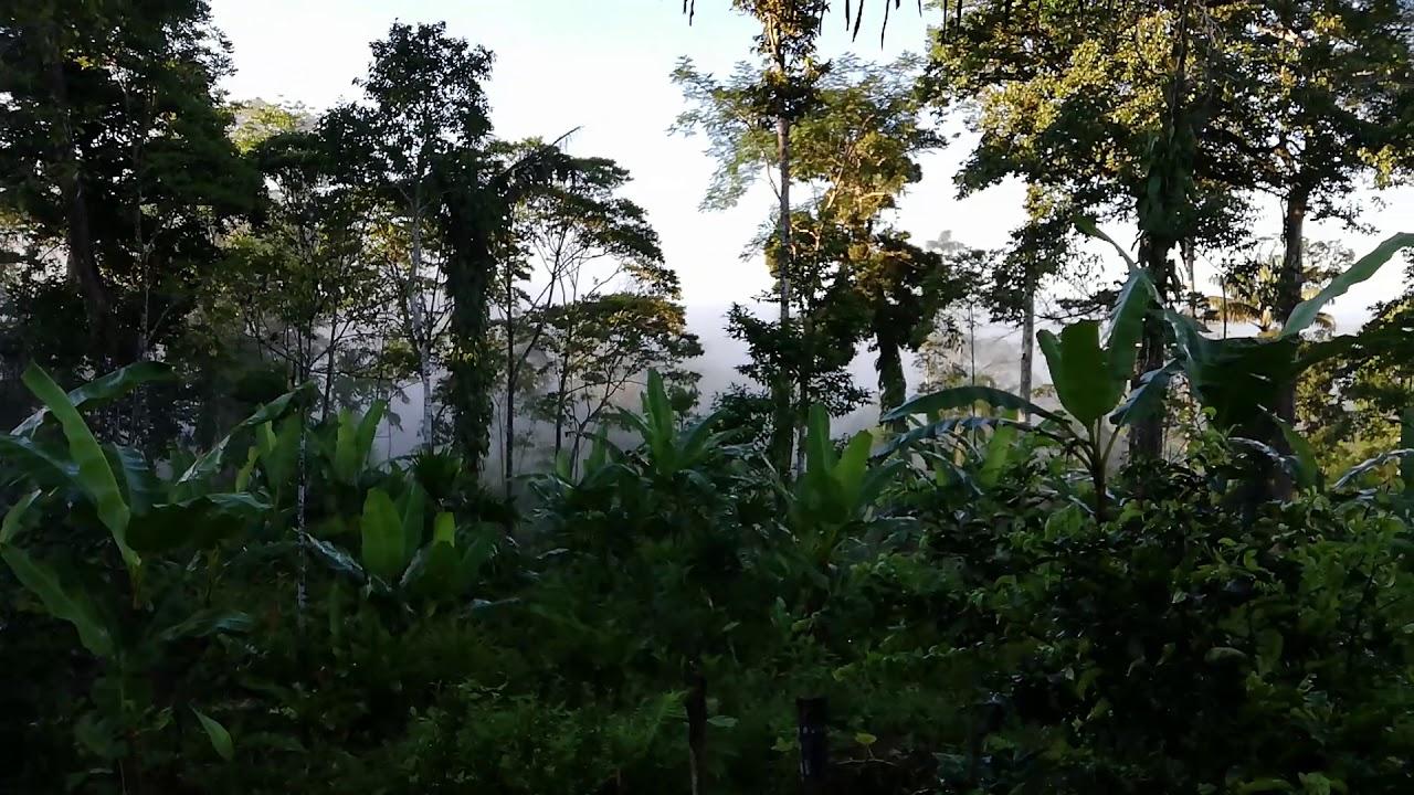Matin en Amazonie