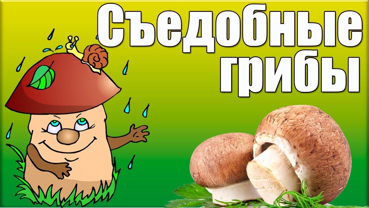 энциклопедия съедобных грибов с фотографиями