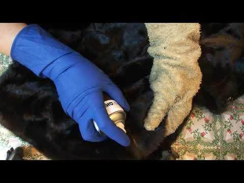 Как покрасить шубу из енота в домашних условиях