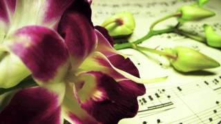"Romantic Piano Music: Sweet Music ""Solo Piano"", Music for Lovers and Piano Bar"