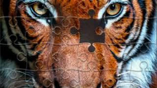 Пазлы  тигр