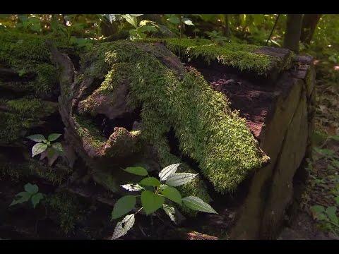 Hemmer Woods | Indiana Natural Wonders