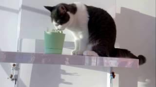 Голодная кошка/Hungry cat