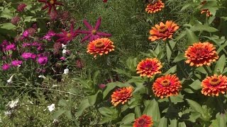 How To Grow Snapdragon Flowers Gardening Tips Advice Burpee