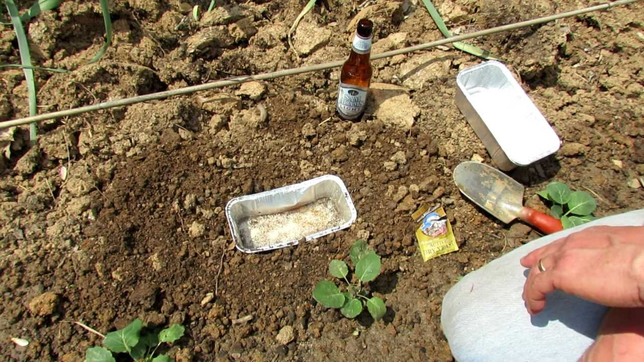 TRG 2012: How to Make the Ultimate Vegetable Garden Beer and Yeast ...