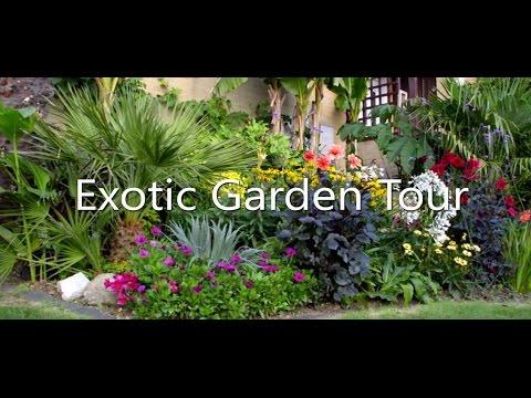 My Subtropical UK Garden August 2015