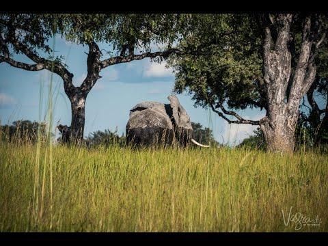 Okavango Delta Safari - Botswana