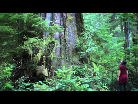 """The Walbran Valley's """"Castle Grove"""" - Canada's Finest Old-Growth Cedar Forest"""