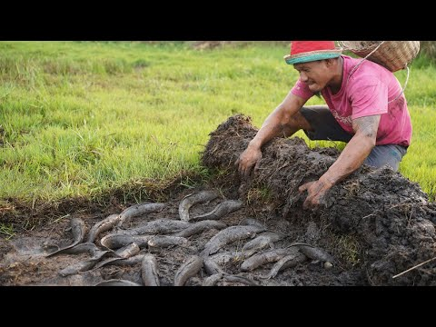 Amazing Fishing Under Grass - Finding & Catfish  Under Grass By Hands In Dry Season