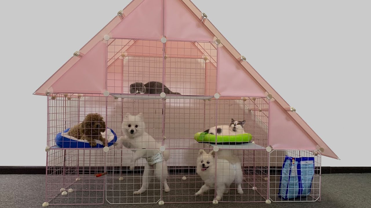 DIY Homestay for Pomeranian Puppies with Magic Mesh | How To Make Cute Dog Cat House Ideas | MR PET