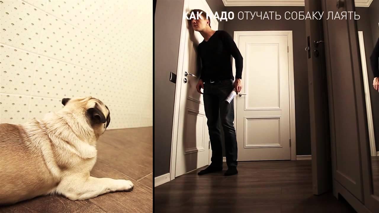 Как надо отучать собаку лаять