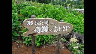 平田村 ジュピアランドひらた 世界のあじさい園・ゆり園