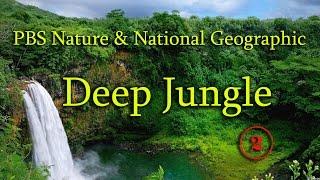 NG: Сердце джунглей: Лесные чудовища / 2 серия