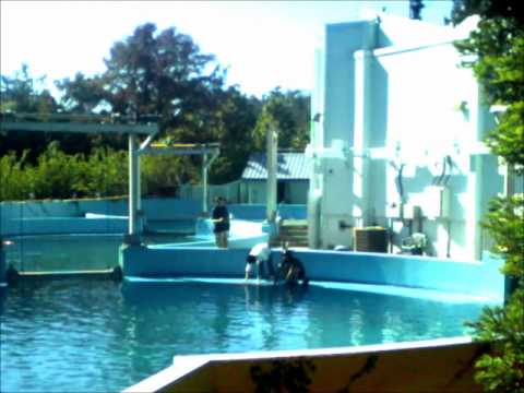 Shouka in back pool before show six flags discovery for Pool show discovery