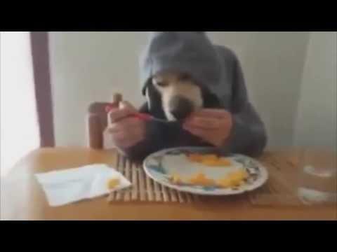 прикол собака ест руками