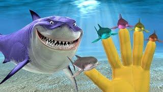 Animals Cartoons   Shark Finger Family Songs  Shark Animals Finger Family Rhymes For Children