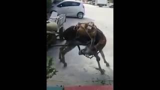 Ишак как мотоцикл, если не едет надо подсосать! 😂🤣