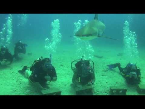 Week 15, 2011 - ( Daily Log, Wed, Apr 13, Shark Dive ) Ocean Explorers Dive Center in St. Maarten