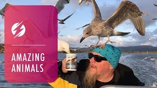 Seagulls Swarm To Drink From Captain's Cup Of Tea