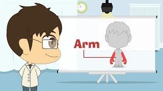 Human Body Parts in English for Kids - أجزاء جسم الإنسان باللغة الإنجليزية للأطفال