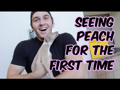 Vlog of Me Picking Up My New Puppy From the Airport