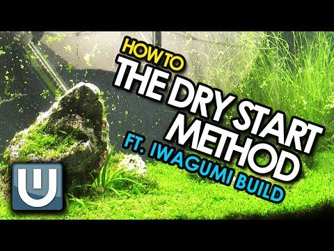 The Dry Start Method | Iwagumi Tank Build | How To