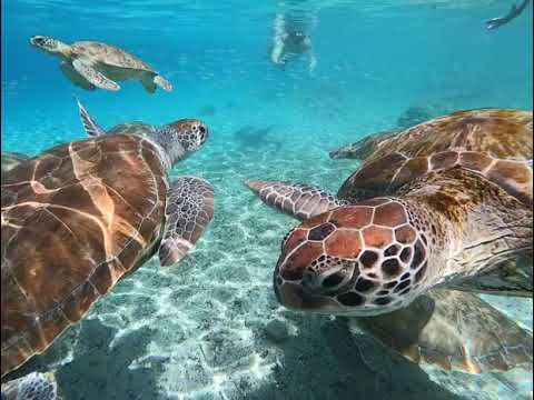 Curacao Dreams Travel - Sea turtles Curacao