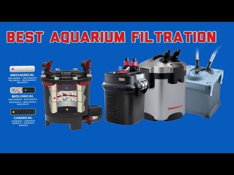 WHAT IS THE BEST AQUARIUM FILTER | DIY AQUARIUM FILTER VS BIG BRAND AQUARIUM FILTER