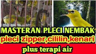 Download Mp3 Masteran Pleci Nembak. Pleci Zipper,cililin,kenari Plus Terapi Air.