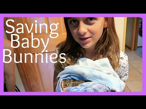SAVING BABY BUNNIES
