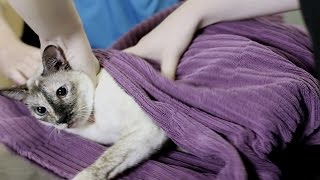 N2 the Talking Cat S4 Ep4 - Burrito Cat 2
