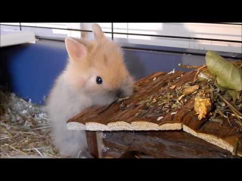 Fluffy baby rabbits enjoying forage