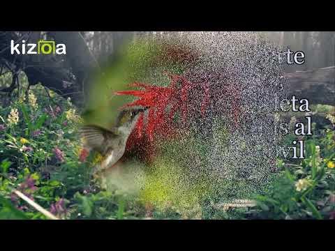 Kizoa Editar Vídeos Movie Maker Frases Para Cuidar El
