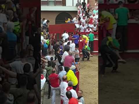 Una vaca salta al callejón en las fiestas de Villafranca