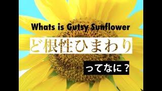 Pray for TOHOKU~ みんなで一緒に咲かせよう!ど根性ひまわり ~未来の子供たちに伝えよう~ 2011・3・11 東日本大震災より月日が経ちます。 甚大な被害...